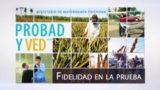 8 de octubre | Fidelidad en la prueba | Probad y Ved 2016 | Iglesia Adventista