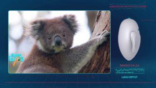 La mejor protección – canguros y marsupiales | SUPER LUPA |  TERCERA TEMPORADA