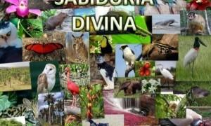 Lección 4 | Sabiduría divina | Escuela Sabática Power Point