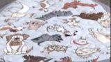 Alfombra para mascotas | parte 2 | Rincón de Arte | Nuevo Tiempo